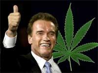 marihuana_schwarzenegger