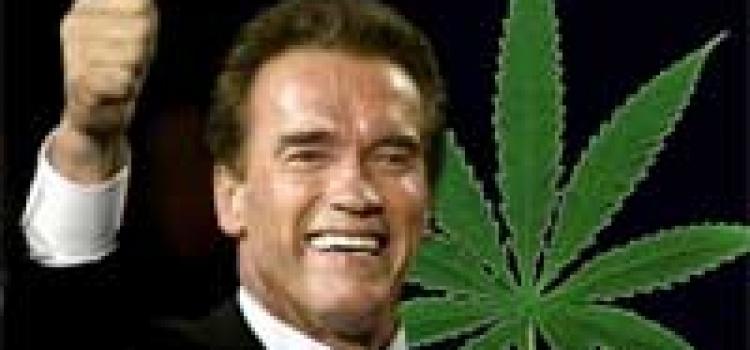 Poker und legales Marihuana